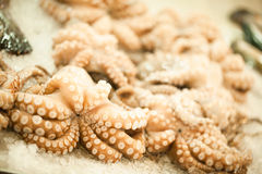 Octopus on the market. Seafood. Octopus on the market. Fresh raw seafood Royalty Free Stock Photography