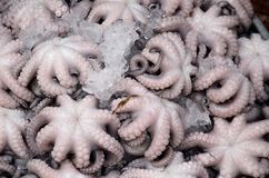 Octopus on market in Vietnam Stock Photos