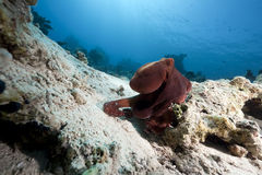 Octopus and ocean Stock Images