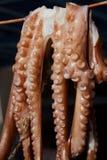Octopus op een lijn Royalty-vrije Stock Afbeelding