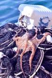 Octopus op het visnet Royalty-vrije Stock Foto's