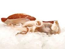 Octopus op Ijs royalty-vrije stock foto