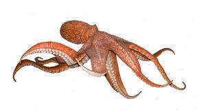 Octopus op wit Royalty-vrije Stock Fotografie