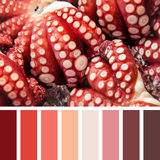 Octopus palette Stock Photography
