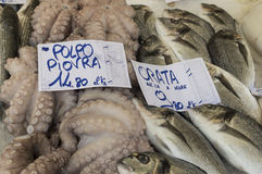 Octopus, piovra, sea bream. At fish market in Udine Italy Royalty Free Stock Image