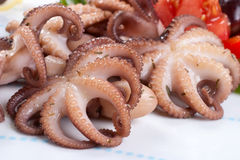 Octopus in red wine Stock Image