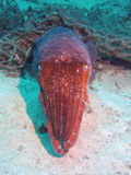 Octopus Relaxing Royalty Free Stock Photography