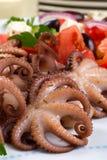 Octopus in rode wijn Royalty-vrije Stock Fotografie