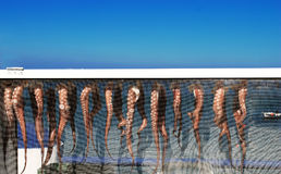 Octopus`s legs. Octopuse`s legs drying in the sun on Rhodes Island, Greace Royalty Free Stock Images