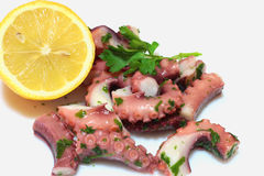 A octopus salad Stock Photography