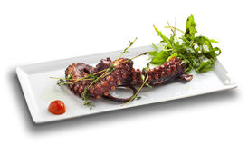 Octopus salad. On white background stock image