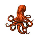 Octopus. Sea Monster. Octopus. Vector color engraving vintage illustrations. Isolated on white background Royalty Free Stock Images