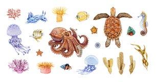 Octopus, sea turtle, squid, cuttlefish, calamari, jellyfish, coral watercolor illustration big set. Hand drawn sea life animals.