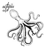Octopus. Seafood. Vector illustration. Isolated image on white background. Vintage style stock illustration