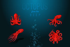 octopus with shadow. Hand drawn original close up vector illustration. Stock Image