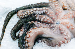 Octopus squid frozen Royalty Free Stock Photography