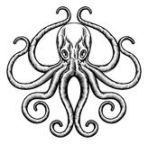 Octopus or Squid Illustration Stock Photography