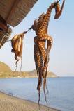 Octopus in the Sun Stock Photos