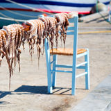 Octopus     in the sun europe greece santorini and light Royalty Free Stock Image