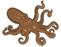 Octopus swimming isolated white background Royalty Free Stock Photography
