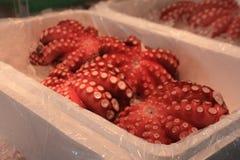 Octopus. Tako or octopus sold at Tsukiji fish market, Tokyo, Japan Royalty Free Stock Photo