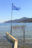 Octopus tentacle drying under the sun. In Greece Royalty Free Stock Photo