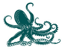 Octopus with tentacles Stock Image