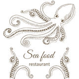 Octopus and tentacles. Octopus background. Octopus and tentacles restaurant menu design cover. Octopus flyer. Fresh octopus template. Octopus hand drawn vector royalty free illustration