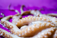 Octopus tentacles close up Stock Images