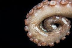 Octopus tentacles closeup detail view.  Stock Images