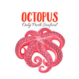 Octopus vector illustration in cartoon style Royalty Free Stock Image