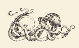 Octopus Vintage Illustration, Hand Drawn, Sketch. Octopus vintage illustration, engraved retro style, hand drawn, sketch Stock Photography