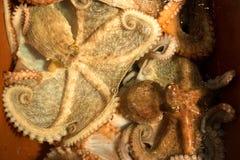 Octopus voor verkoop in een Koreaanse vissenmarkt stock afbeeldingen