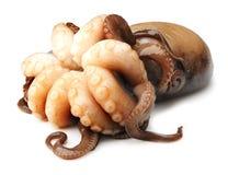 Octopus on white background Royalty Free Stock Image