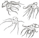 Octopuses Royalty Free Stock Photos