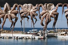 Octopuses And Harbour Royalty Free Stock Images
