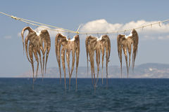 Octopuses drying on the string in Greece Royalty Free Stock Photo