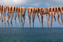 Octopuses drying in the sun Stock Photography
