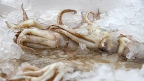 Octopuses lying in the ice on the market. Greece stock image