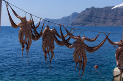 Octopuses on the rope Royalty Free Stock Photography