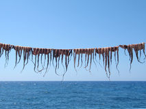 Octopuses on the String. Octopuses drying on the string on a Greek island stock image