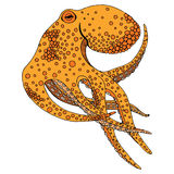 Octopusillustratie Stock Foto's