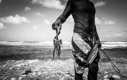 Octopusjager van Barabdos, het wild Royalty-vrije Stock Afbeelding