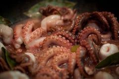 Octopusschotel Royalty-vrije Stock Fotografie