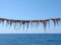 Octopussen op het Koord stock afbeelding