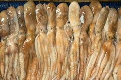 Octopussen voor verkoop bij de Koreaanse vissenmarkt stock fotografie