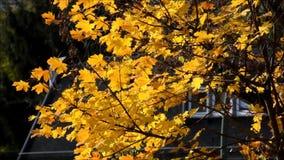 Octubre de 2016 de oro en Berlin Spandau, Alemania almacen de metraje de vídeo
