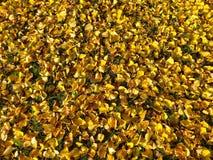 Octubre de oro Fotografía de archivo libre de regalías