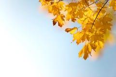 Octubre de oro Imagen de archivo