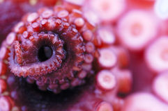 Octupus. Detail of octopus close up Stock Image